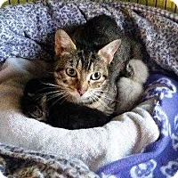 Adopt A Pet :: Tahiti - Putnam, CT