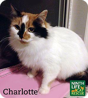 Cat Adoption Oakville
