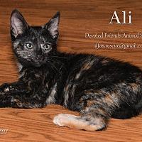 Adopt A Pet :: Ali - Ortonville, MI