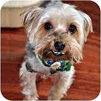 Adopt A Pet :: VA Tiger - Woodbridge, VA