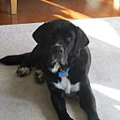 Adopt A Pet :: Magnus (COURTESY POST)