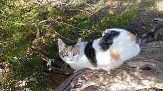 Adopt A Pet :: Jule  - Fischer, TX