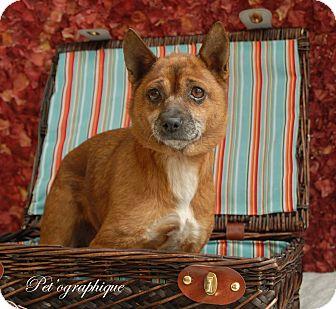 Adopt A Pet :: Dawn  - Las Vegas, NV