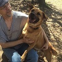 Adopt A Pet :: Olivia - Fair Oaks Ranch, TX