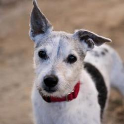 Palm Springs Animal Shelter In Palm Springs California