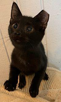 Adopt A Pet :: Jet  - Dumfries, VA