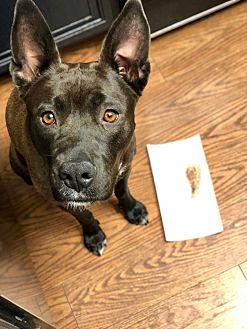 Adopt A Pet :: Nina  - Bakersfield, CA