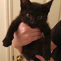 Adopt A Pet :: Dashy - Midvale, UT