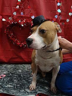 Adopt A Pet :: Walker  - Henderson, NC