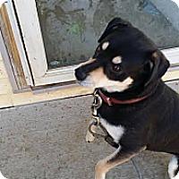 Adopt A Pet :: Mecko - La Crosse, WI