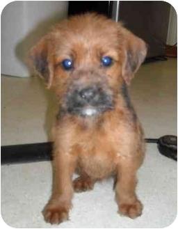 Newburgh In Irish Wolfhound Meet 2 Puppies Left A Pet