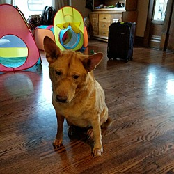 Puppies for Sale in Wooster Ohio - Adoptapet com