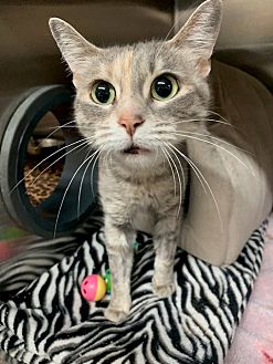 Adopt A Pet :: Willowy  - Moose Jaw, SK