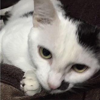 Adopt A Pet :: Babs  - Northwood, NH