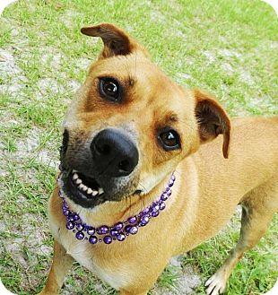 Retriever (Unknown Type) Mix Dog for adoption in Umatilla, Florida - Pogo