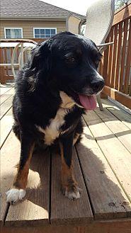 Adopt A Pet :: Bailey  - Clarksville, TN