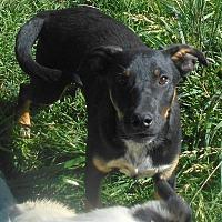 Adopt A Pet :: Napolean - Allentown, NJ
