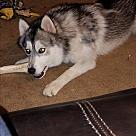 Adopt A Pet :: Nova (COURTESY POST)