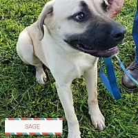 Adopt A Pet :: Sage - Ashland, AL