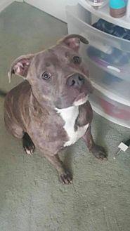 Adopt A Pet :: Kahleesi  - Anchorage, AK
