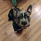 Adopt A Pet :: Cecilia - ADOPTION PENDING
