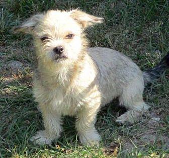 Adopt A Pet :: Oakley  - Camden, SC