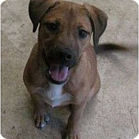 Adopt A Pet :: Whiner - Snellville, GA