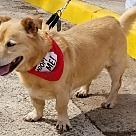 Adopt A Pet :: Cecil