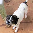 Adopt A Pet :: Bubba