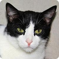 Adopt A Pet :: Apache - St. James City, FL