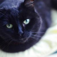 Adopt A Pet :: Raleigh - New Freedom, PA