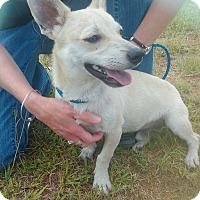 Adopt A Pet :: Rupert - Lebanon, CT