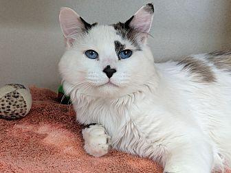 Adopt A Pet :: Gavin  - Laramie, WY
