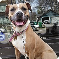 Adopt A Pet :: Suger - Kendall, NY