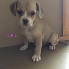 Adopt A Pet :: Julia