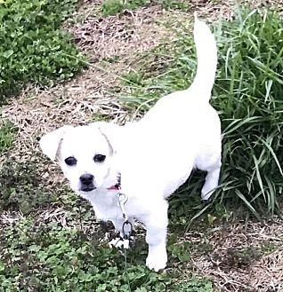 Adopt A Pet :: Mia  - Wartrace, TN