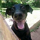 Adopt A Pet :: Achilles