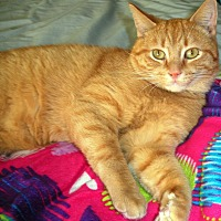 Adopt A Pet :: Cody - Chesterland, OH