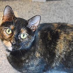 Nebraska Cat Adoption