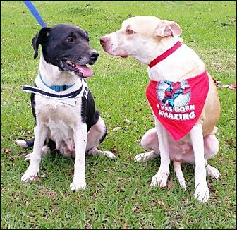 Adopt A Pet :: Larson  - Simsbury, CT