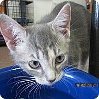 Adopt A Pet :: Queenie - Bunnell, FL