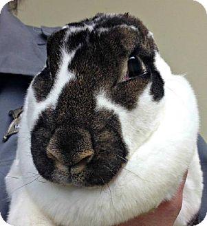 Rex for adoption in Mt. Pleasant, Michigan - Edith
