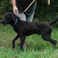 Adopt A Pet :: Thibodaux - Jefferson, TX