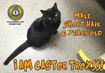 Adopt A Pet :: Castor Troy  - Nicholasville, KY