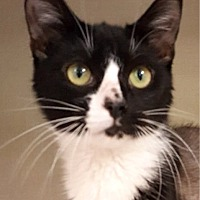 Adopt A Pet :: Luciano - Key Largo, FL