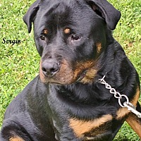 Majesty Rottweiler Rescue Inc In Darlington Maryland