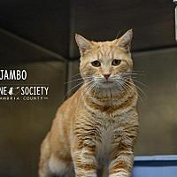 Adopt A Pet :: Jambo - Johnstown, PA