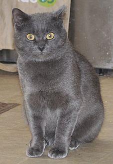 Adopt A Pet :: Stormy - NC  - Liberty, NC