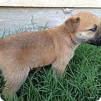 Adopt A Pet :: Ian - Arlington, TX
