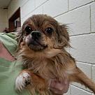Adopt A Pet :: Ellie